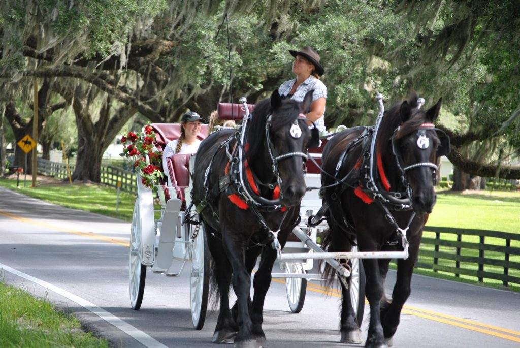 Day trip to Ocala - Horse-drawn carriage tour