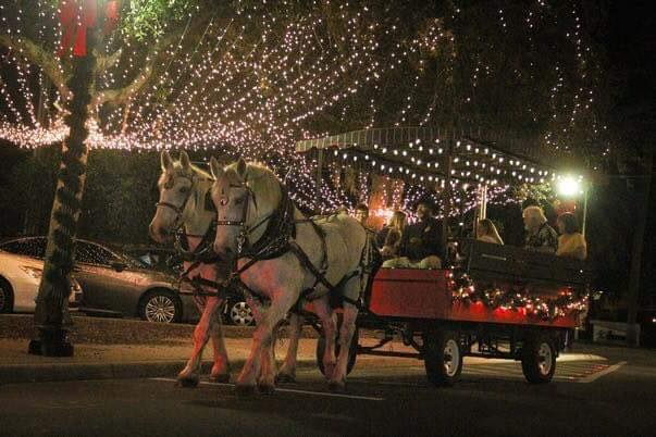 Holiday horse drawn carriage rides